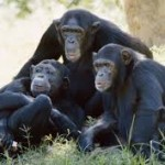 5 Day Gorilla and Chimpanzee Tracking