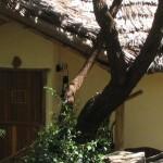 Kigongoni-Lodge