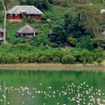 Naivasha green crater lake