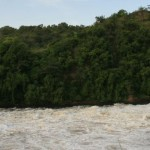 Near Murchison falls