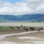 Ngorongoro Crater 1