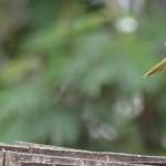 bunyonyi-birding