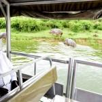 Boat cruise at Kazinga