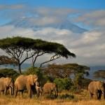 elephants-kenya_36879_990x742